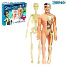 Тело человека Научный опыт «Строение тела»